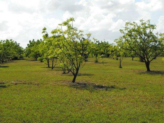 abaco-neem